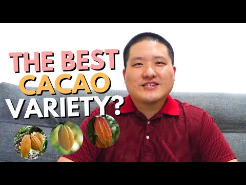 Which is the best cacao variety?