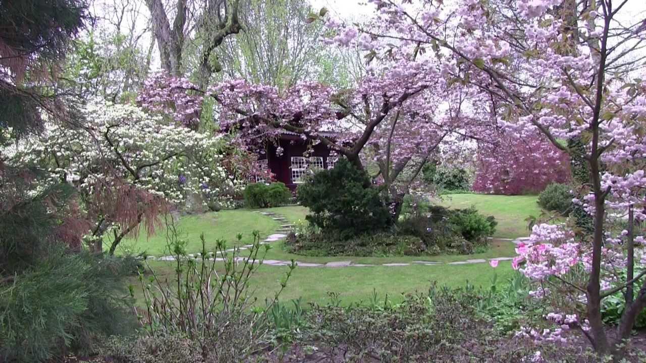 桜祭り Cherry Blossom Japanese Garden japanischer Garten Kirschblüte - YouTube