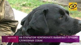 Лучших служебных собак выбирают на открытом чемпионате в Могилёве