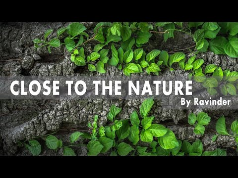 Close to the nature | Meditation Video
