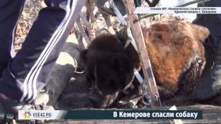 Кемеровские спасатели вызволили собаку из решетки