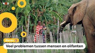 Te koop: 170 olifanten uit Namibië