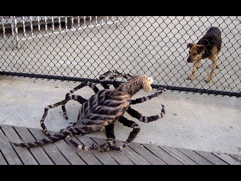 How To Make A Spider Costume For Your Dog
