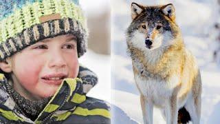 Ребенок спас волка, когда он был ещё щенком. Спустя годы они снова встретились и он плачет,зная это