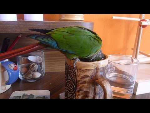 Lžička Parrot Pyrrhura Penny