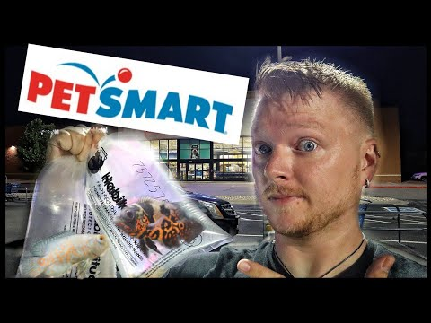 Buying Fish From Petsmart!