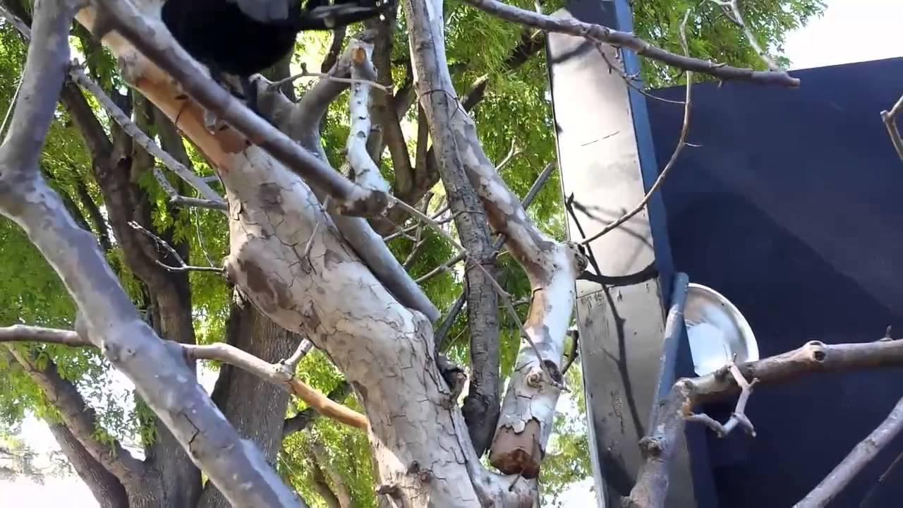 making spooky halloween tree decorations fake tree decor idea diy