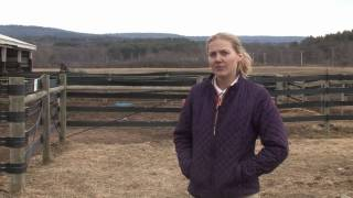 Horses Care & Grooming : How Big Should a Horse Corral Be?