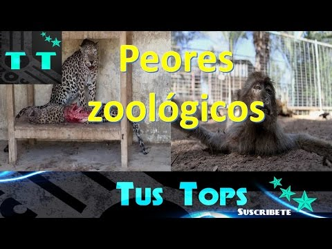 Top 5 Peores zoológicos