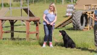 A1k9 Dog Training Classes - Small Video