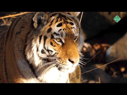 Вопрос: Зоопарк и заповедник. В чем различие?