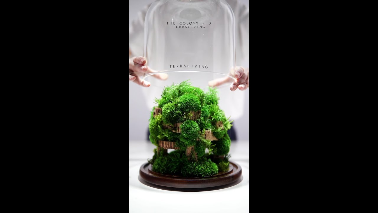 The Colony - X, Preserved Moss Terrarium Botanical Sculpture by TerraLiving.