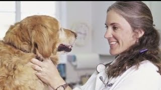 Your Pet and Vet Relationship | Pets Plus Us