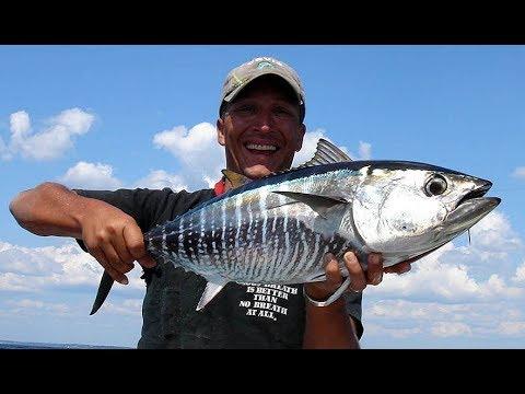 Bluefin Tuna Fly Fishing / Rat Race
