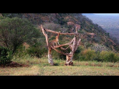 Ngulia Safari Lodge, Tsavo National Park West, Kenya - leopard