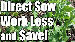 2 Min. Tip: Save Time & Money by Directly Sowing Seeds