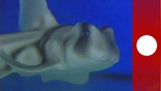Gli squali non sono poi così cattivi - science