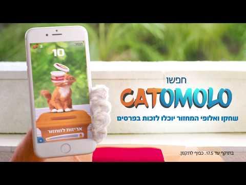 דדי החתול במשחק שמלהיב את כולם – כתומולו!