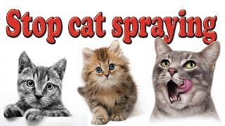 Stop cat spraying   How to stop cat spraying?   Cat pee   Cat Urine