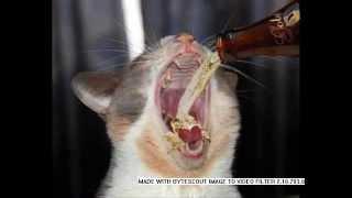 Приколы про пьяных животных