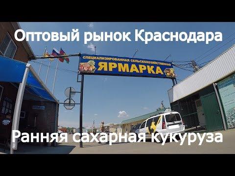 Оптовый рынок Краснодара. Продажа кукурузы в разгаре