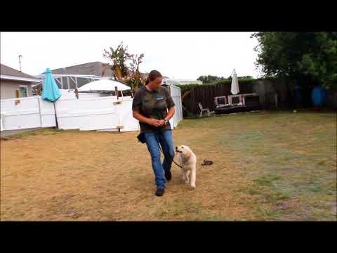 Stella 1 week puppy academy update