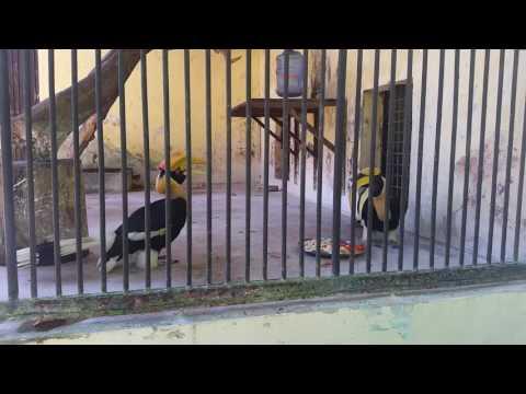 Schräge Vögel im Yangon Zoo, Myanmar