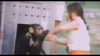 감동 실험 시설에서 풀어진 침팬지와 18송년의 재회