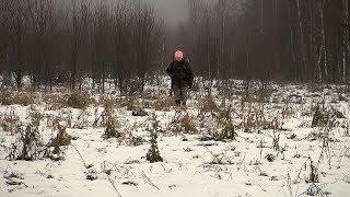 Праздничная охота на зайца с русской пегой. Январь 2018.