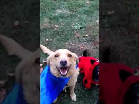 Behind the scenes Halloween Costume Rescue Dog Photo Shoot