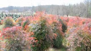 Harrisburg Pa Area   WE Have Trees, Plants  And Shrubs XXX  Aaa BBB VVV