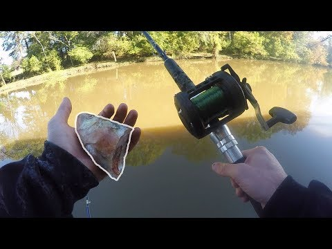 Fishing For HUGE Catfish In A Creek With BIG Cut Bait