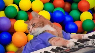 Кот играет на пианино, прикол 2016!