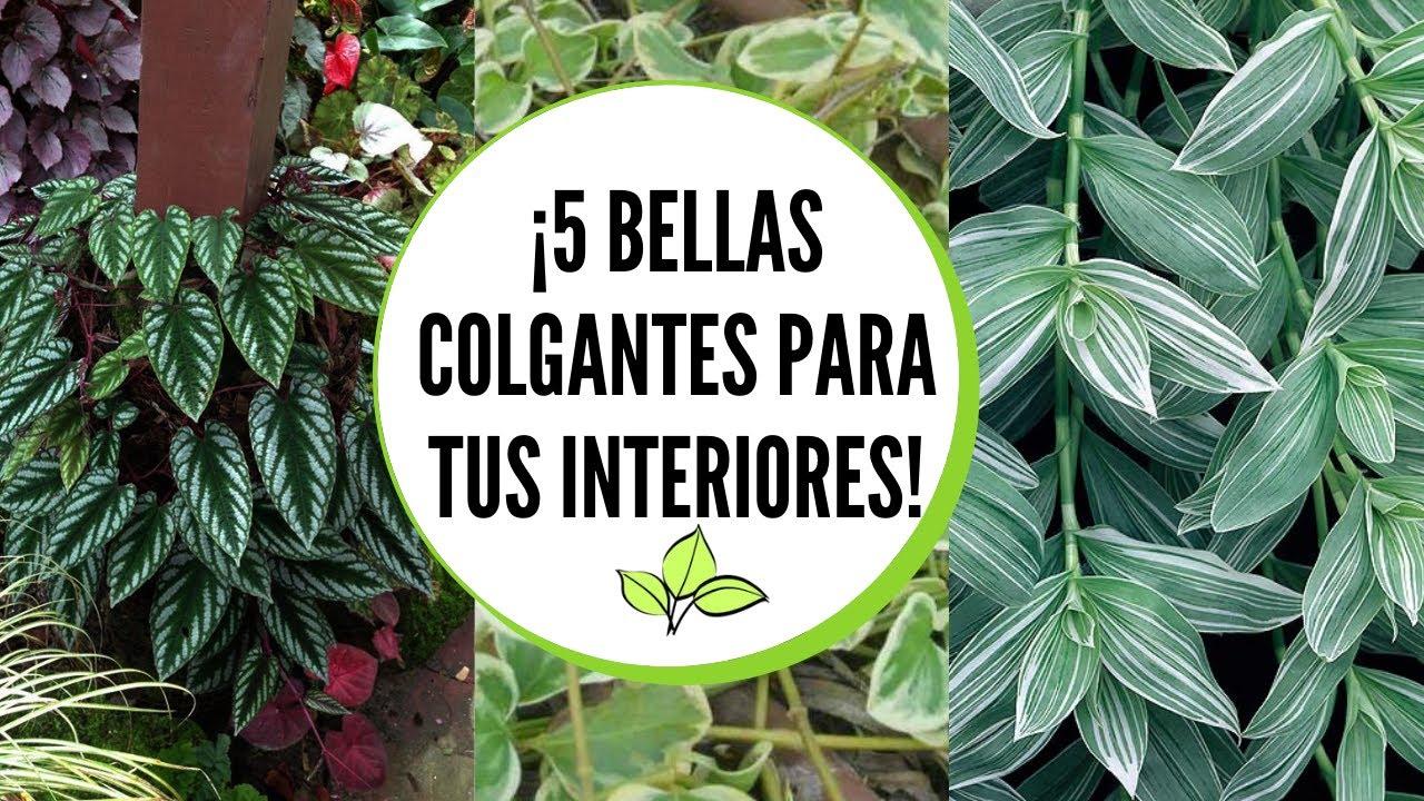Plantas colgantes de sombra III  / Plantas colgantes de interior III