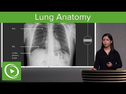 Lung Anatomy – Radiology | Lecturio