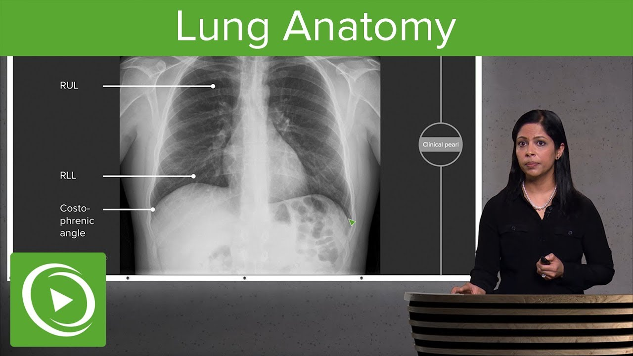 Lung Anatomy – Radiology | Lecturio