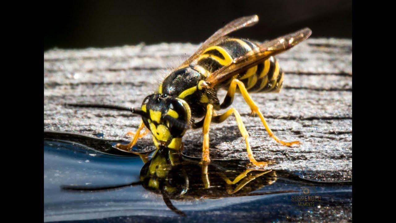 how to build a hornet trap