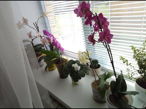 Орхидеи на южном окне Чем лучше затенять от солнца Июнь 2019