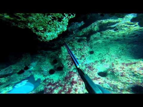 Norfolk Island spearfishing update 6