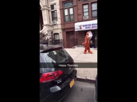 Harlem(HDoggie) is the official mascot of HDDS