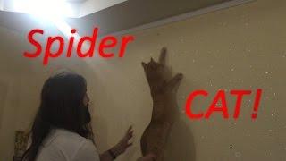 Спайдер кот: Охота на муху