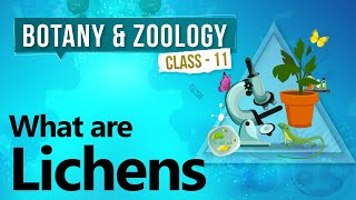 What are Lichens - Diversity in Organisms - Biology Class 11