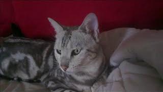 Gambar cover Acker Bilk - Alley Cat