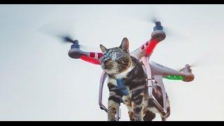 Квадрокоптер, дрон  ТОП приколы