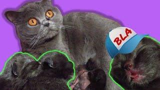 ВЛОГ- Наша кошка родила троих котят. Им здесь 7 дней