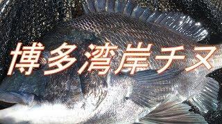 博多湾 へチ釣り チヌ