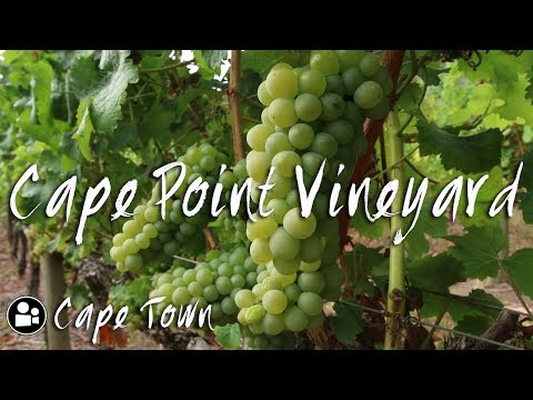 Cape Town Travel Guide | Whats in Sun Valley | Cape Point Vineyards