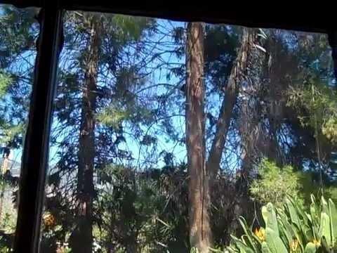 SOLD BY JULS IN 12 DAYS!  MONROVIA, CA - Historic Property @ 270 Norumbega Drive, CA 91016