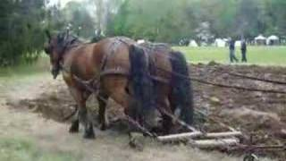 My Horses Working A Plow