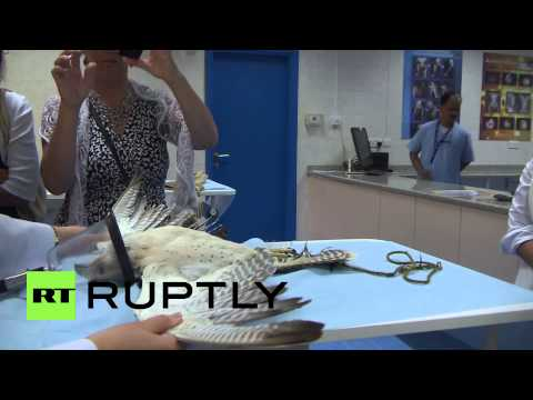 UAE: Returning to flight inside world's largest falcon hospital